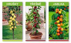 Stuffed Peppers, Vegetables, Riga, Food, Gardens, Pear, Cherry, Stuffed Pepper, Essen