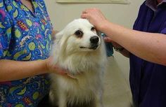 Vet Answers: What to Do If Your Dog Eats Chocolate  -  poisoning, treatment.        lj