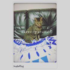 キャリー4歳のお誕生日おめでとう🐟🎉 暮らし始めてあっという間の4年😊毎日楽しい😊 元気にすくすく育ってね♡ 9/29は招き猫の日って今日知って招き猫の日にキャリーは家に来てくれてなんかスゴイなと思った1日☺︎ #毎日ありがとう#キジトラ#愛猫#luv#cat#ねこ#ネコ#happybirthday #招き猫の日