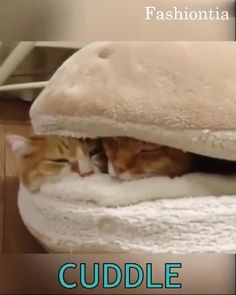 Hamburger Bed Disassemblability Windproof Pet Puppy Nest - Mimi More - Pet Fashion Happy Animals, Animals And Pets, Baby Dogs, Pet Dogs, Unique Animals, Cute Animals, Hamburger Bed, Pet Fashion, Pet Puppy