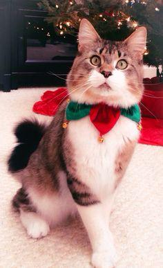 Burberry feeling festive today!