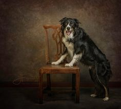 J Ferrett Photography-Dog Photographer  www.jerrettphotography.com