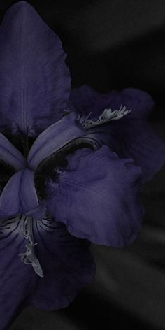 "Flowers in Neutral Moment-2015 "" Iris tectorum "" Archival pigment print Printed on cotton rag fine art paper Photo by Soichi Oshika"