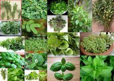 7 Vital Herbs From The Herbalist's Garden