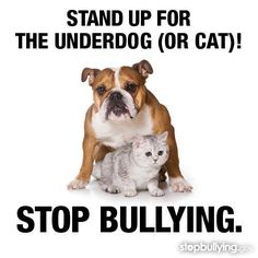 Stop bullying! Stand Up for the Underdog (Or Cat)! Stop Bullying, Anti Bullying, Adult Bullies, Bullying Prevention, The Underdogs, Anger Management, Stand Up, French Bulldog, Things To Come