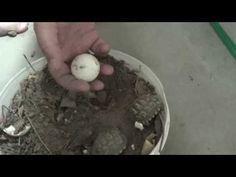 pajarito saliendo del cascaron - YouTube