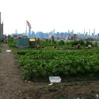 10 Urban Farming Projects in New York City.