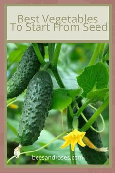 If you are new to gardening, growing vegetables might be a little intimidating. Read on to learn which vegetables are good to start from seed. It's not as hard as you might think. Amazing Gardens, Plants, Growing Pumpkins, Garden Ideas Budget Backyard, Diy Garden Projects, Gardening For Beginners, Garden Ideas To Make, Container Gardening Vegetables, Gardening Tips