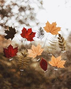 Fall Pictures, Halloween Pictures, Autumn Photos, Foto Nature, Duke Ellington, Autumn Aesthetic, Autumn Cozy, Fall Wallpaper, Iphone Wallpaper
