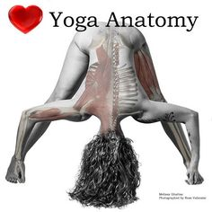 'Yoga Butt' injury is frequently experienced in Ashtanga or Vinyasa yoga after a few months of regular practice. Niki Vetten explains why. Gluteal Muscles, Back Muscles, Surya Namaskara, Neck Problems, Latissimus Dorsi, Pelvic Tilt, Yoga Anatomy, Body Joints, Muscle Anatomy