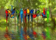 Colorful macaws on a wire