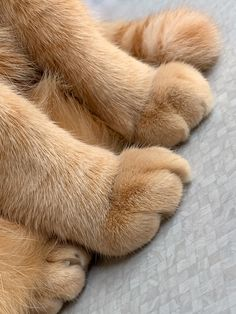 Tabby Cats My baby had a injury. people shud be damn sure before adopting a pet. Cute Cats And Dogs, Cats And Kittens, Cat Paws, Dog Cat, Cat Whisperer, F2 Savannah Cat, Orange Tabby Cats, Cat Quotes, Ginger Cats