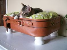 Recycling ideas for samsonite trunks, trolleys and hard plastic travel cases. Suitcases repurposed in homemade furniture, chests drawers and cabinets. Trendy Furniture, Small Furniture, Cat Furniture, Colorful Furniture, Vintage Furniture, Homemade Furniture, Diy Pallet Furniture, Repurposed Furniture, Furniture Makeover
