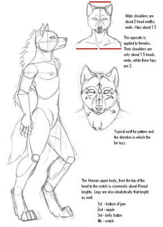 Anthro Werewolf Tutorial by KMoongangSR on DeviantArt Anthro Werewolf Tutorial by KMoongangSR. Male Figure Drawing, Figure Drawing Reference, Anatomy Reference, Art Reference Poses, Werewolf Art, Poses References, Furry Drawing, Anatomy Drawing, Anthro Furry