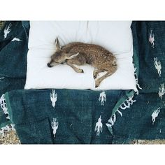 Desert Days, Your Spirit Animal, Wild Creatures, Beautiful Creatures, Baby Animals, Pixie, Feathers, Beast, Kitty