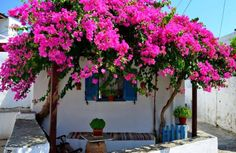 Sifnos Island in Cyclades Backyard Covered Patios, Mexican Home Decor, Mediterranean Home Decor, Wall Paint Colors, Outdoor Living, Outdoor Decor, Secret Places, Exotic Plants, Planting Flowers