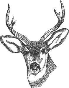 Deer Head clip art - vector clip art online, royalty free & public domain