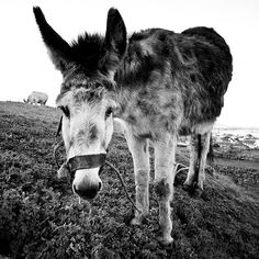 You've go to love donkeys! If you will look on their backs at the shoulder area, you will see that God put a cross on this amazing creature.