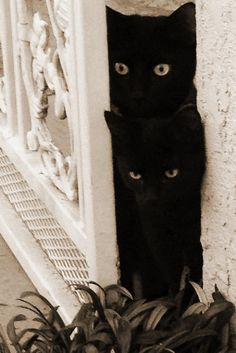 Black Cats Love