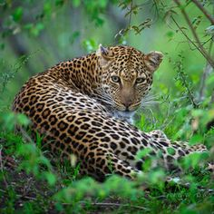 ...xx..tracy porter...poetic wanderlust...-leopard by David Lloyd