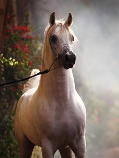 looks so much like my horse i just had to put down :'( she was my best friend!! i miss her so much!!