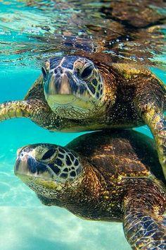 Bora Bora, French Polynesia One of Bora Bora s best experiences, swimming with the sea turtles at... by Kenzy Mahruos - Photo 149024279 - 500px