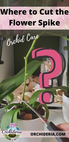 Indoor Orchids, Orchids Garden, Garden Plants, Indoor Plants, House Plants, Orchid Plant Care, Orchid Plants, Orchid Propagation, Container Gardening