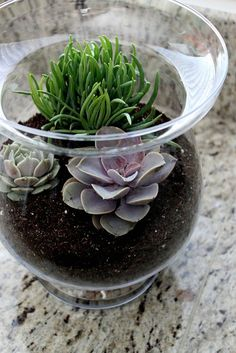 terrarium- would make for a gorgeous centerpiece!