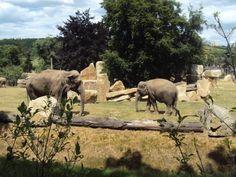 Praha zoo Prague Zoo, Online Tickets, Trip Advisor, Places To Go, Elephant, Animals, Bohemia, Animales, Animaux