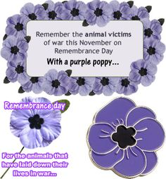 Wear your purple poppies Remembrance Day Activities, Remembrance Day Poppy, Poppies Poem, Memorial Day Flag, Poppy Craft, Armistice Day, Purple Poppies, Rock Flowers, Australia Day