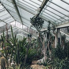 The Princess of Wales Conservatory at Kew is right up our street. Not geographically, but certainly in terms of architecture, horticulture and that 'it just feels right' feeling. Kew Gardens Wedding, Kew Gardens London, Versailles Garden, Hothouse, Plants Are Friends, Closer To Nature, Princess Of Wales, Conservatory, Garden Projects