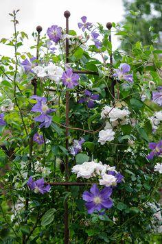 Runner Beans, Herbaceous Border, Obelisks, Plant Supports, Back Gardens, Steel, Rose, Plants, Pink