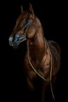 www.pegasebuzz.com | Equestrian Photography : Jörn Reiter