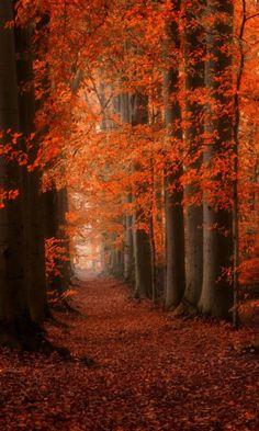 a walk in the fall