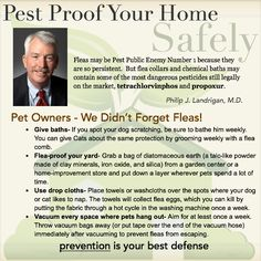 Pest Proof your Home, the Safe Way