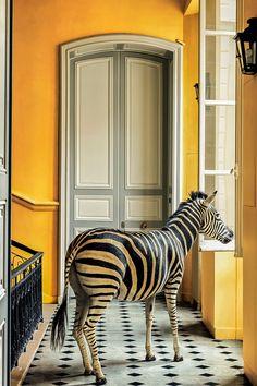 ANIMAL, dentro da sua casa...