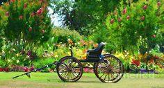 BEAUTIFUL!!!!!!  Buggy And Flower Garden by Debbie Portwood