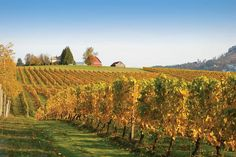 Willamette Valley Wine Tourism | Touring  Tasting