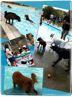 Doggy Swim Event for Friends of East Rumbrook Dog Park!  Wheeeeee!