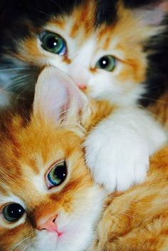 Cats  ♡ ❤For More Follow On INSTA @love_ushi OR PINTEREST @ANAM SIDDIQUI ♥ ♡