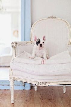 Baby French Bulldog; Ella. From Dreamy White blog.