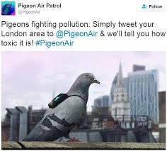 Yes this pigeon is wearing a back-pack. She is doing her bit as a Londoner to monitor pollution levels in the city.
