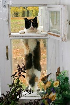 Looks like Kitty isn't content just looking in...he's gonna climb in!!