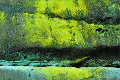 lichen love