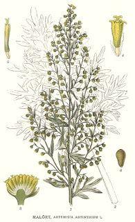 Centáurea de Reva: Óleo Essencial de Artemísia (Artemisia absinthium)...