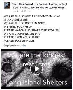 11/16/16 PLEASE SHARE!! THEY ALL NEED HELP!! LONG ISLAND! THE FORGOTTEN ONES! /ij https://m.facebook.com/story.php?story_fbid=1279617225392201&id=1067275326626393&__tn__=%2As