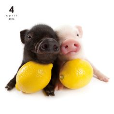 Mini THE PIG | OTHER | Artlist Collection CALENDAR 2016