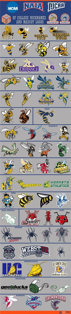 logomostbest's Content - Page 2 - Chris Creamer's Sports Logos Community - CCSLC College Football Logos, Sports Team Logos, College Sport, Typo Logo, Logo Branding, Mascot Design, Logo Design, Sports Decals, Sports Art