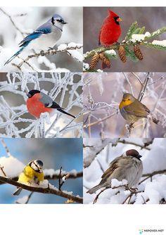 Развитие, обучение детей - Neposed.net | VK Emotions Preschool, I Heart Organizing, Winter Crafts For Kids, Montessori Materials, Nature Journal, Creative Kids, Beautiful Birds, Kids And Parenting, Watercolor Art