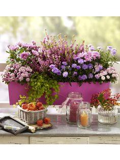 Der Balkonkasten hat noch lange nicht ausgedient, denn auch im Spätersommer und Herbst blüht es mit den richtigen Pflanzen zauberhaft. Das
